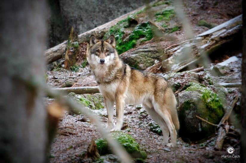 vlci-8644